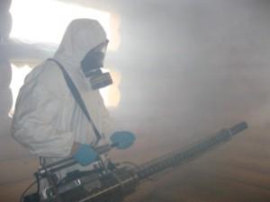 Уничтожение клопов горячим туманом