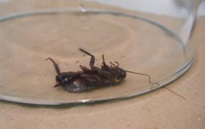 Уничтожение тараканов сэс