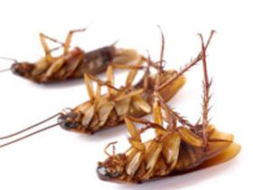 Эффективное народное средство от тараканов