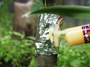 Ловчий пояс от муравьев с инсектицидом