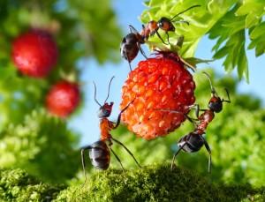 Вред муравьев садовому участку