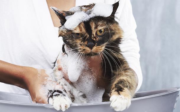 Как использовать шампунь от блох