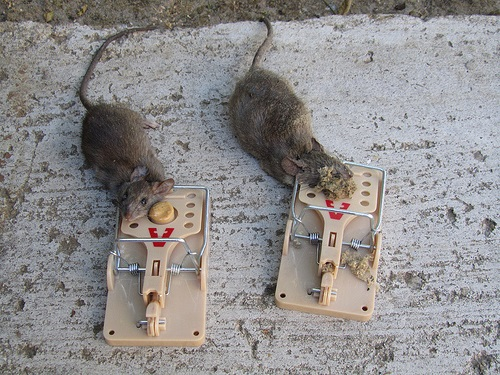 приманки на крысоловку