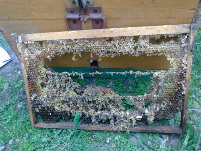 Как хранить мед на зиму в домашних