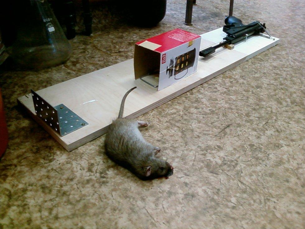 Крысыловка своими руками