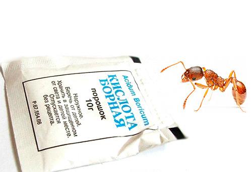 Как избавиться от муравьев в доме: уничтожение в домашних условиях