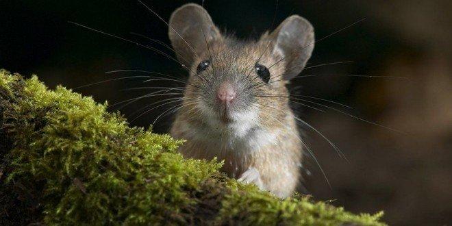 А мыши не боятся все коты