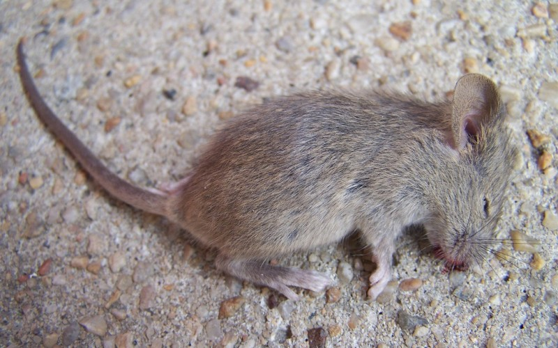 ультразвуковой отпугиватель мышей на батарейках отзывы