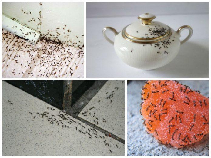 """Результат пошуку зображень за запитом """"3 способа как избавиться от муравьев в доме"""""""