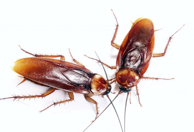 ультразвуковая отпугиватель тараканов