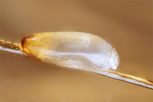 Как избавиться от вшей и гнид в домашних условиях, удаление